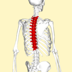 Training Tip Tuesday: How's Your T Spine Mobility Going? (Is it Going at All?)